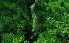 Vista aerea de una carretera en un bosque verde