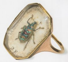200 year old extraordinary ring now found in the entomological collection of the London Natural History Museum.