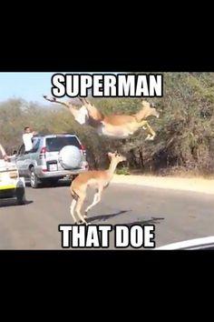 Superman that doe