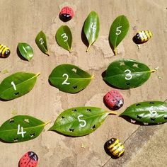 """Early Years Nursery teacher on Instagram: """"Utilising some nature for more free learning resources. After pruning my camelia I punched some mini butterfly holes into the leaves and…"""" Nursery Teacher, Spring Term, Mini Beasts, Learning Resources, Butterflies, Plant Leaves, Number, Nature, Free"""