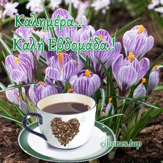 Good Morning, Tableware, Buen Dia, Dinnerware, Bonjour, Dishes, Bom Dia, Buongiorno