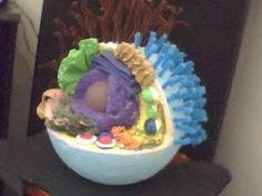simple 3d animal cell project - Google Search