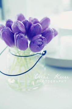 Lavender tulips are soooo gorgeous
