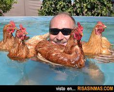 Foto rara del día: bañándose con sus gallinas.