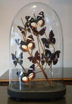 Love these butterflies