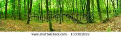 Green forest. Panoramic image. by isak55, via ShutterStock