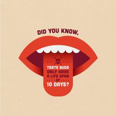 Dental Trivia: Ever burned your tongue? Ever noticed it heals super quick! That's because a tastebud has a life cycle of less than 2 weeks! Humor Dental, Dental Quotes, Dental Hygiene, Dental Health, Dental Care, Oral Health, Health Care, Dental Fun Facts, Holistic Dentist