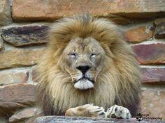 Isn't he gorgeous? Fort Worth Zoo, Dallas, Animals, Animales, Animaux, Animal, Animais
