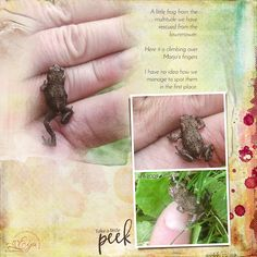Tiny Frog - Oscraps Gallery Scrapbooking Layouts, Digital Scrapbooking, Word Art, Gallery, Scrapbook Layouts, Scrapbooking Ideas, Scrapbook Page Layouts