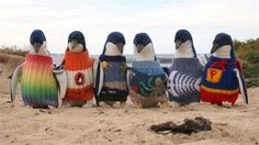 Penguins wearing sweaters are the cutest thing ever