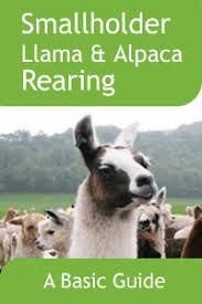 Image result for llama mange Llama Alpaca, Alpacas, Fiction, Books, Animals, Image, Libros, Animaux, Book