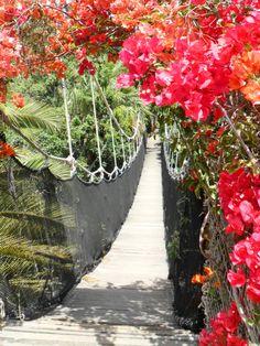 Jungle park, Las Aguilas, Tenerife, Canary Islands.