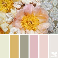 today's inspiration image for { flora hues } is by @wanderforawhile ... thank you, Kathryn, for another incredible #SeedsColor image share!