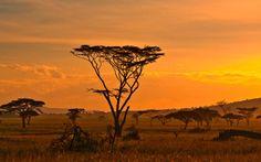La savane africaine - Circuits Afrique du sud