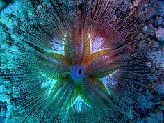 Blue sea urchin | Maui Blue Spotted Sea Urchin | Local Art - Los Angeles