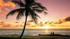 Turtle Island Fiji   20 year anniversary!