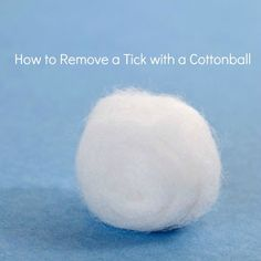 Soak a cotton ball with liquid soap and cover the area where the tick is for about 15-20 seconds. The tick will come out on its own and be stuck to the cotton ballwhen you remove it.