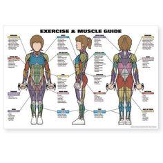 Algra Women's Exercise  Muscle Guide http://www.mysharedpage.com/algra-womens-exercise