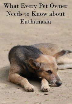 Putting your dog to sleep is never an easy time. While no amount of information can take away the pain, knowing the details of dog euthanasia can help with the decision process when the time comes.