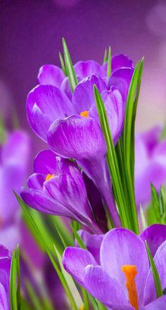 Flowers Purple Garden Plants Ideas For 2019 Exotic Flowers, Amazing Flowers, Red Flowers, Spring Flowers, Beautiful Flowers, Nice Flower, Purple Garden, Flower Aesthetic, Spring Aesthetic