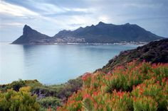 Hout Bay with Cape fynbos in the foreground The Beautiful Country, Beautiful Places, Lonely Planet, Costa, South Afrika, Kwazulu Natal, Out Of Africa, Landscape Wallpaper, Being In The World