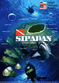 Malaysia: marine animals :D