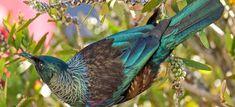 New Zealand's Weird Birds