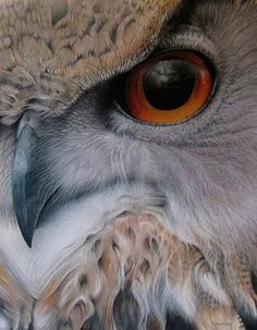 Owls eye ... #PleaseComeCloser  Zoom In - Close Up - Animals