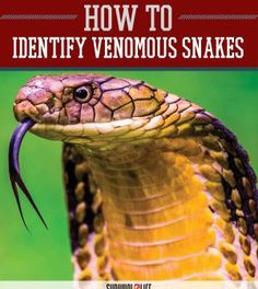 Survival Skills : Guide to Venomous Snakes | How To Get Rid Of Poisonous and Deadly Snake by Survival Life at http://survivallife.com/2015/04/13/survival-skills-venomous-snakes
