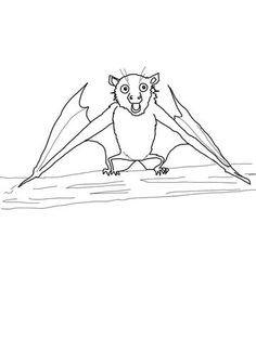 Best Coloring: Printable fruit bat coloring pages - Amazing Coloring sheets - Fruit Coloring Pages, Coloring Pages To Print, Free Printable Coloring Pages, Coloring Sheets, Free Coloring, Free Printables, Precious Moments Coloring Pages, Stellaluna, Fruit Bat