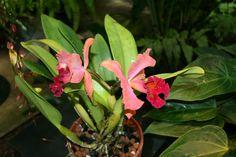 August 2008~ Marie Selby Botanical Gardens Sarasota, Florida