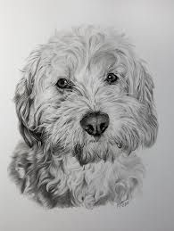 Cockapoo *** | pictures in 2019 | Pinterest | Cockapoo ...