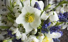 Christmas roses, grape hyacinths and snowdrops.