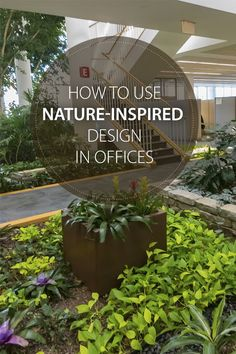 How To Use Nature-Inspired Design In Offices