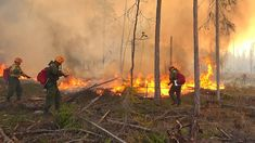 Russia Forecasters Warn Over Siberia Forest Fires - The Moscow Times World Meteorological Day, Global Warming, Climate Change, Warm Weather, Russia, Fire, Moscow, Van, Google Search