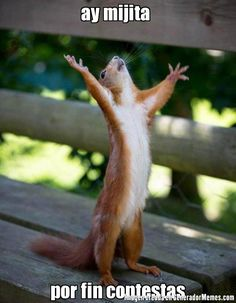 Are you looking for a super adorable squirrel meme? Make somebody's day that much brighter with a funny squirrel meme. Bon Week End Image, Happy Squirrel, Funny Squirrel, Red Squirrel, Squirrel Season, Squirrel Calls, Ground Squirrel, Real Estate Humor, Real Estate Quotes