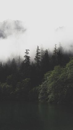 Nature/Landscape This photo has a lighter background, but a darker foreground, creating a sense of mystery, in this dark forest. Foggy Forest, Dark Forest, Tree Forest, Night Forest, Misty Forest, Fantasy Forest, Cool Wallpaper, Wallpaper Backgrounds, Nature Wallpaper