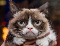 Grumpy Cat is seen after her book signing at Kitson at The Linq in Las Vegas. The two-year-old feline recently signed a two-book deal, worth more than £60million, and a movie, after she took the internet by storm with her iconic moody facial expressions (Rex Features)