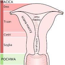 medicarus Polish Language, Chemistry, Medical, Study, Education, School, Fitness, Mind Maps, Human Body