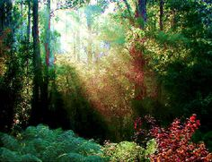 The Dandenong Ranges in Victoria, Australia, are a favourite spot for tourists from interstate as well as from overseas.