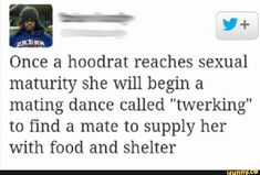 """FL"""" Once a hoodrat reaches sexual maturity she will begin a mating dance called """"twerking"""" to find a mate to supply her With food and shelter - iFunny :) Funny Dance Memes, Dance Humor, Funny Mom Quotes, Funny Jokes, Funny Images, Funny Pictures, Picture Tag, Maturity, You Funny"""