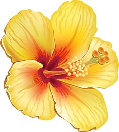 Hawaiian Flowers Coloring Pages - Hawaiian Flowers Coloring Pages , 50 Friendly How to Create Mandala Coloring Pages Fruit Cartoon, Cartoon Flowers, Cartoon Art, Hawaiian Flowers, Hibiscus Flowers, Tropical Flowers, Fruit Painting, Fabric Painting, Festa Moana Baby