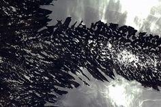 Chris Hadfield Sunlight on the water reflects the many bays of Newfoundland, like vertebra of rock. Back Photos, Cool Photos, Chris Hadfield, Moonlight Sonata, The Family Stone, Earth Photos, Reflection, Newfoundland, Amethyst