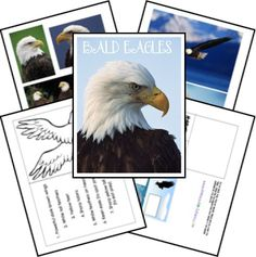 bald eagles study and lapbook printable from Homeschool Share Kindergarten Science, Elementary Science, Science For Kids, Eagle Animals, Bald Eagles, Kids Study, 3rd Grade Reading, American Symbols, Science Biology