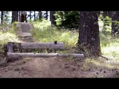 The World's Most Famous Trail Dog is Back Lily Shreds 2 ( www.yesnocan.com ) - YouTube