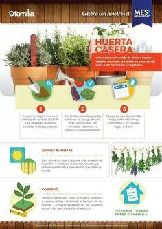Tener un cultivo en casa es sencillo. Acá de damos unos tips para que los tengas…