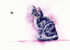 A Norwegian kitten bee-guilted by a flying object.