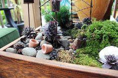 miniaature-fairy-garden.jpg (1024×683)