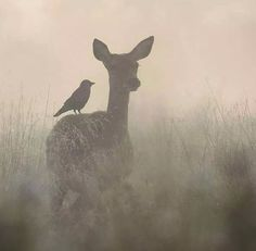 Reh Wiese Tierfreundschaft Vogel