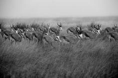 Fotógrafo explora a Africa.